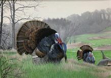 2015 turkey stamp