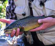 spring trout fishing
