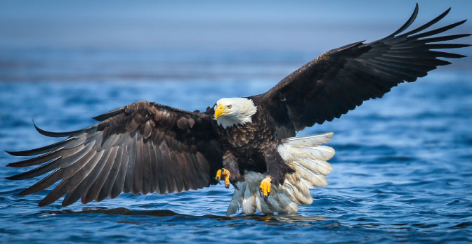 Eagle watching events across Wisconsin celebrate record high numbers of eagles in the state.