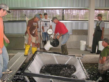 First fish stocked from newly renovated hatchery weekly for Wisconsin fish farms
