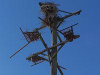 heron nesting platform