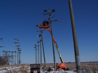 Heron rookery poles