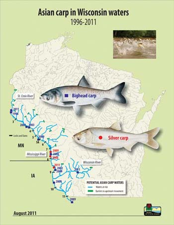 Asian carp distribution