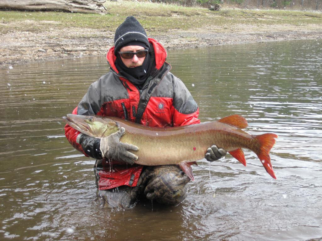 Northern zone musky season opens may 26 weekly news for Wi fishing season
