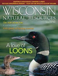 Volunteers and wildlife biologists are working to conserve the common loon.