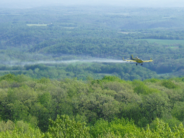 Gypsy moth spraying