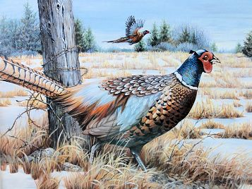 2015 Pheasant Stamp Winner