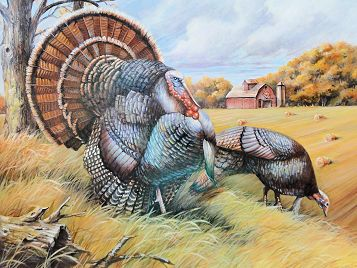 2015 Wild Turkey Stamp Winner