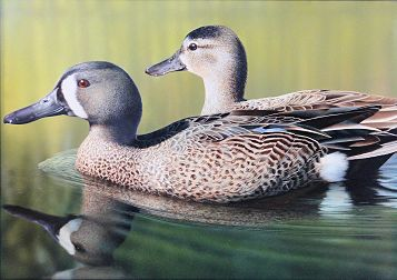 2015 Waterfowl Stamp Winner