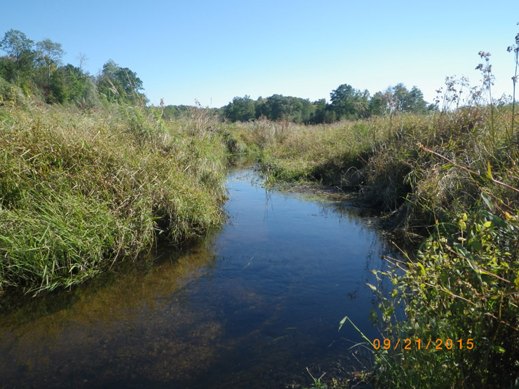 A restored section of Beaver Brook within the Beaver Brook Wildlife Area.