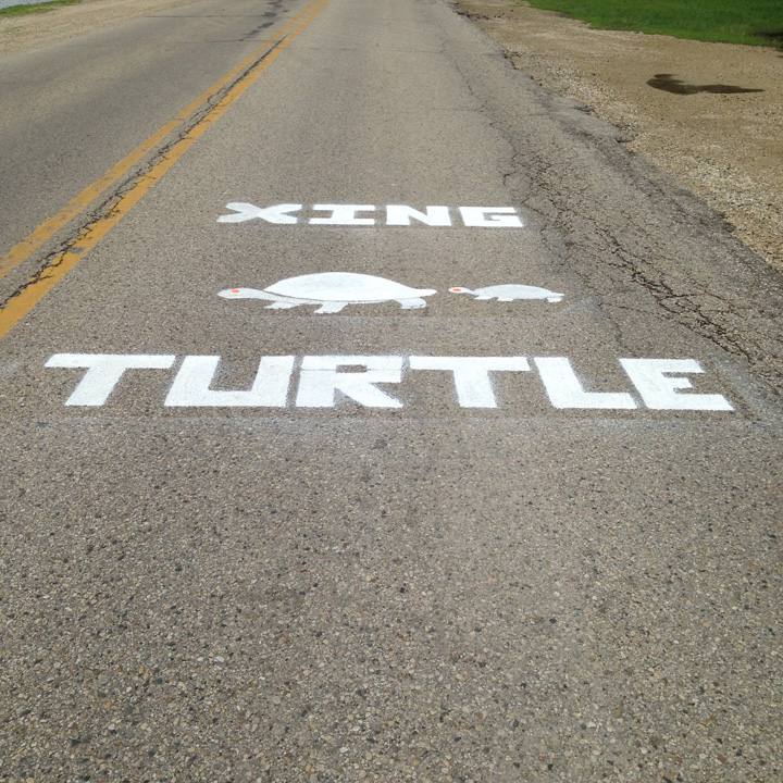 After consulting with local officials, a volunteer stenciled this turtle crossing sign on a roadway in Pell Lake.