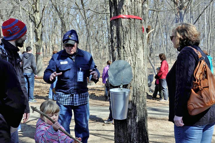 Tapping maple trees is one of the demonstrations available at the annual Maple Syrup Festival at the MacKenzie Center.
