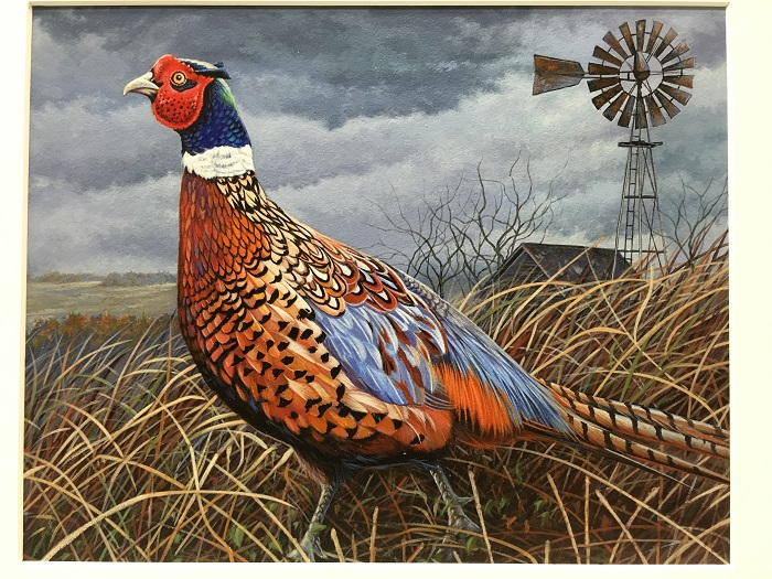First place in the 2017 Pheasant Stamp design contest went to Craig Fairbert of Tony for his depiction of a rooster pheasant.
