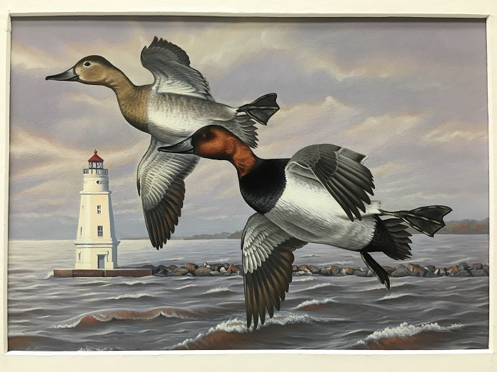 First Place In The 2017 Waterfowl Stamp Design Contest Was Awarded To Sara Stack Of Marengo