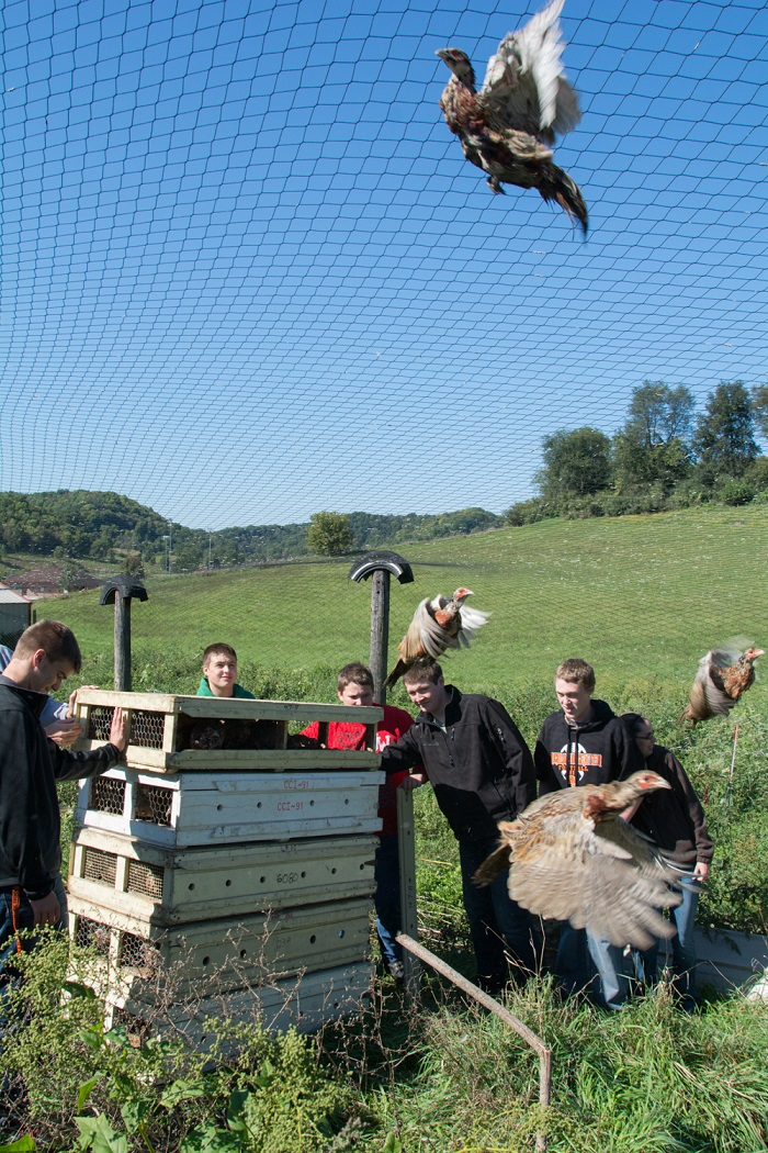 Students at Richland Center High School release a batch of pheasants.