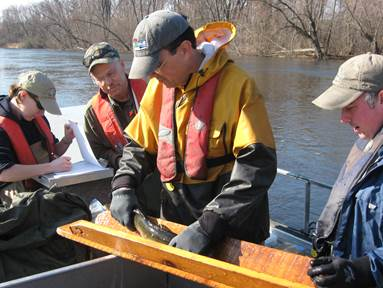 DNR fisheries team members are tagging walleye on tributaries to Green Bay including the Oconto, Peshtigo, Fox and Menominee rivers to learn more about the movements and spawning behavior of the fish.
