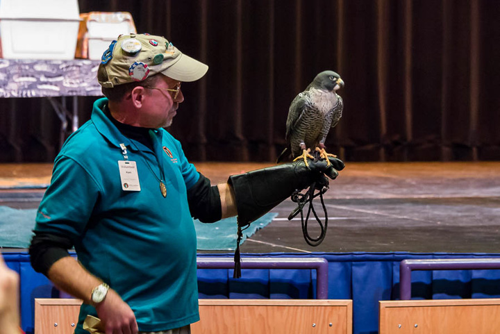Live birds of prey shows are part of Bald Eagle Watching Days Jan. 14 in the Sauk Prairie and at other events this winter.