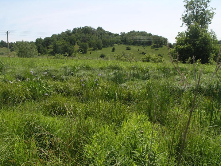 This restored sedge meadow in southwestern Wisconsin provides a variety of habitat benefits.