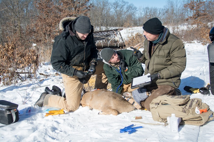 DNR staff are hard at work in the field (with help from a number of landowers) to learn more about Wisconsin's wildlife.