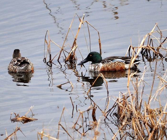 Charming ... Wisconsin Fall Waterfowl Hunting Season Structure. Proposed 2017  Migratory Bird Season Structure And Daily Bag Limits Will Be The Subject Of  March