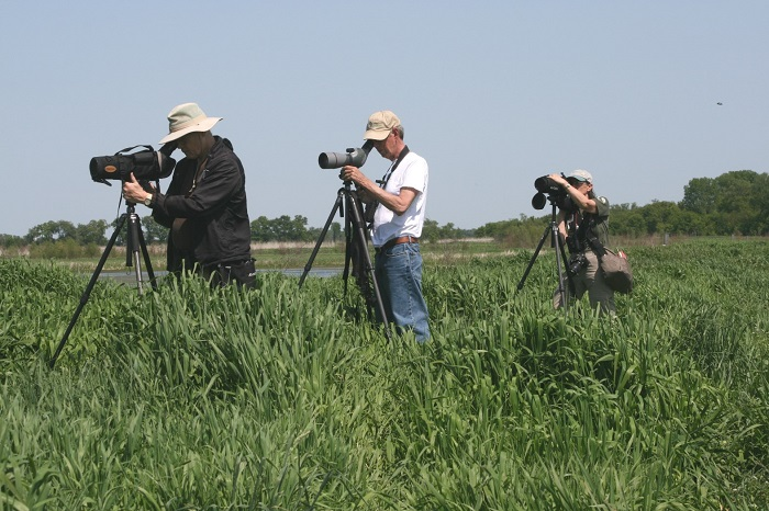 Partnership Program volunteers conduct bird monitoring in Zeloski Marsh.