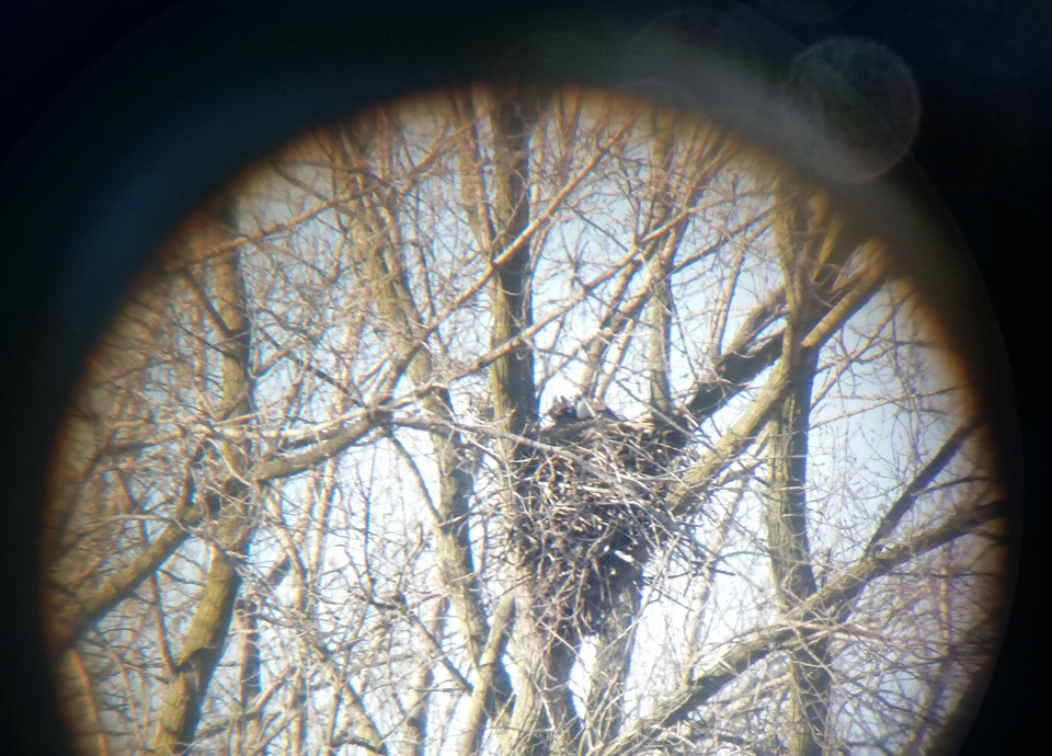 A view through a spotting scope of the first documented bald eagle nest in Kenosha County.