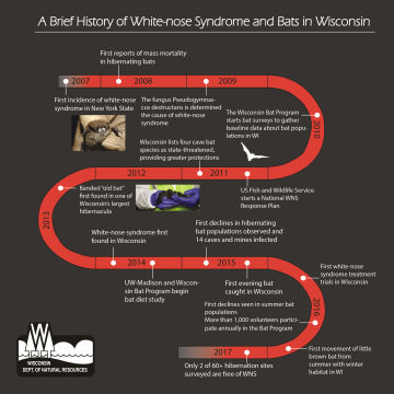 Click on image for a timeline of WNS in Wisconsin and the nation.
