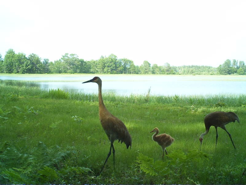 Follow Wisconsin DNR on Facebook and Twitter for Snapshot Wisconsin updates