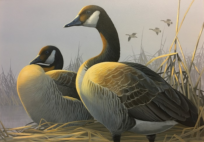 First Place In The 2018 Wisconsin Waterfowl Stamp Design Contest Goes To Caleb Metrich Of Lake