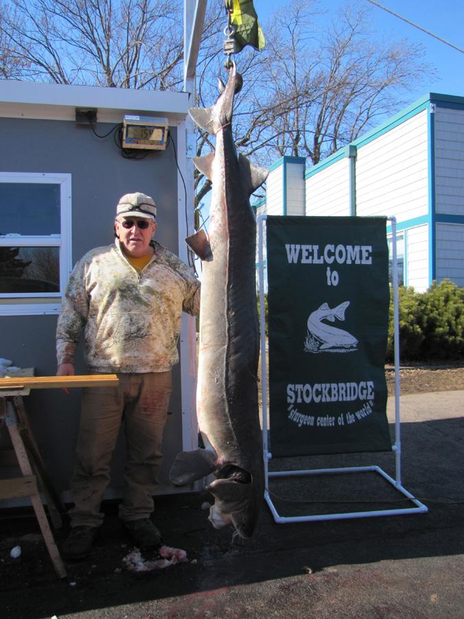 Gerald Peterson's 83.4-inch, 154.9 pound sturgeon.