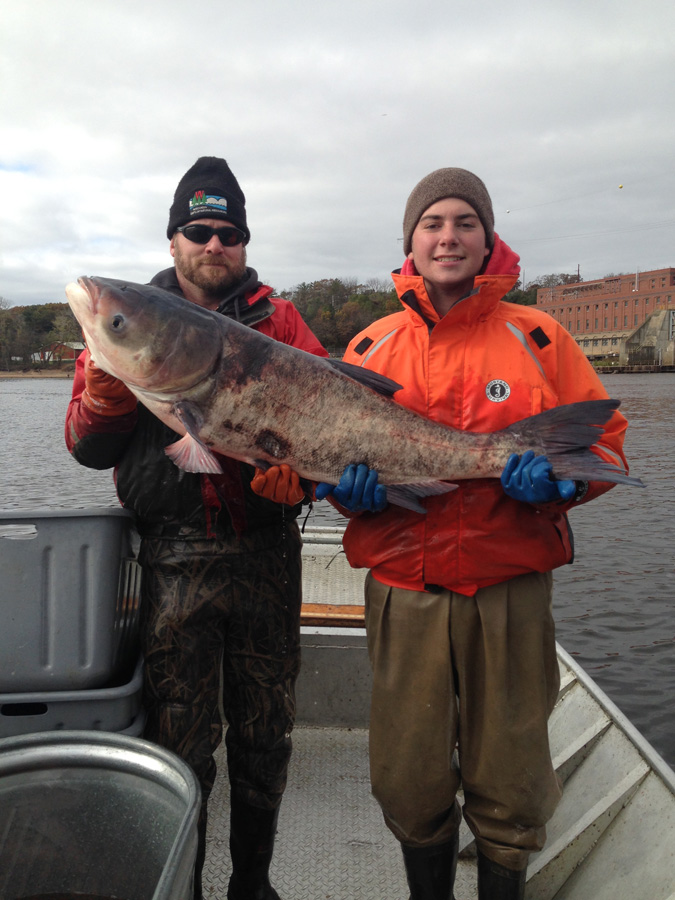 Minnesota anglers reminded to report catching the invasive for Wisconsin dnr fishing report