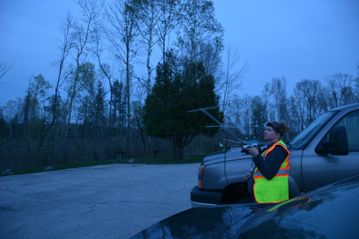Photo of NHC conservation biologist Katie Luukkonen tracking the bat. - Photo credit: Heather Kaarakka