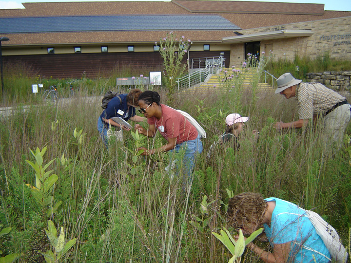 Bumble bee identification and monitoring, shown here, will be among the training sessions offered at the Wisconsin Summit for Natural Resources Volunteers from March 22-24, 2018, in Eau Claire. - Photo credit: DNR