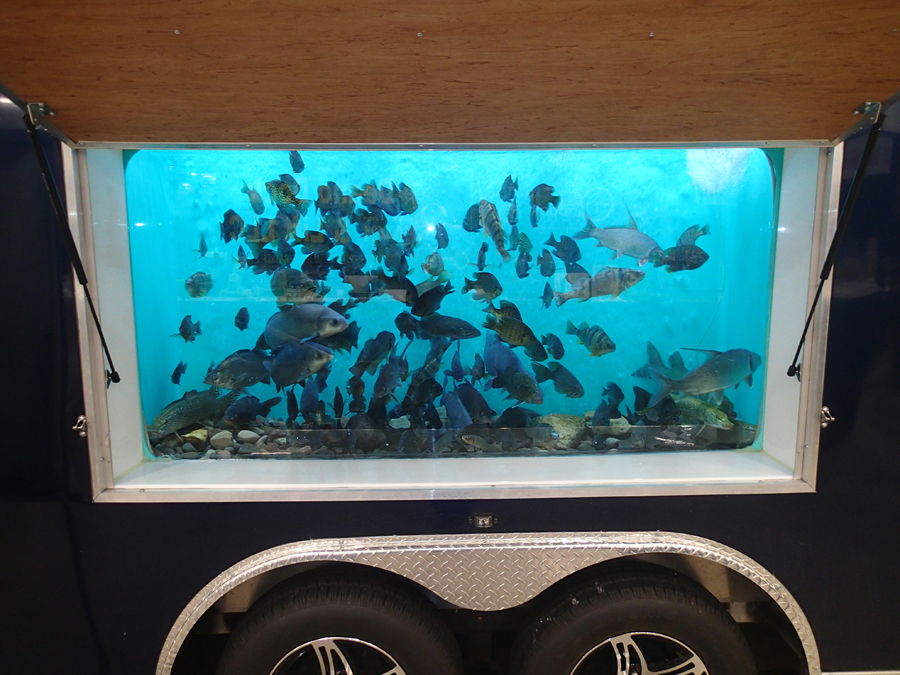 Freshwater fish tank - Photo credit: DNR