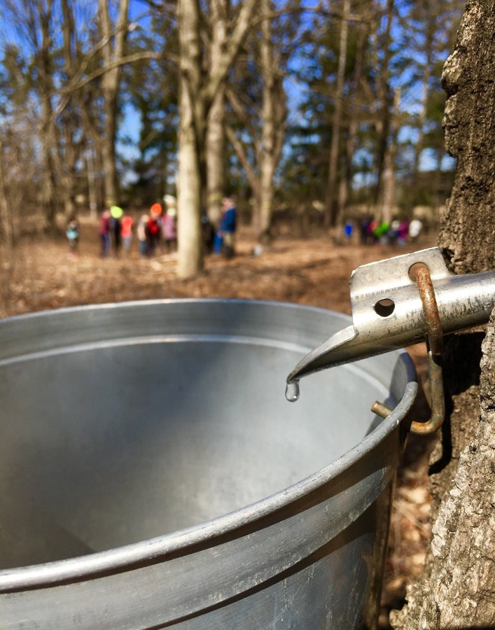 Students participating in the Maple Education Program at the MacKenzie Center gather sap that will be used to make syrup for the center's Maple Fest April 7. - Photo credit: DNR