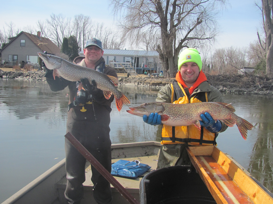 Northern pike will be very active and biting as Wisconsin heads into opening day of the inland fishing season. Fisheries Technician Eric Wegleitner and Fisheries Biologist Adam Nickel display northern pike captured during recent surveys on Lake Winneconne.    - Photo credit: DNR