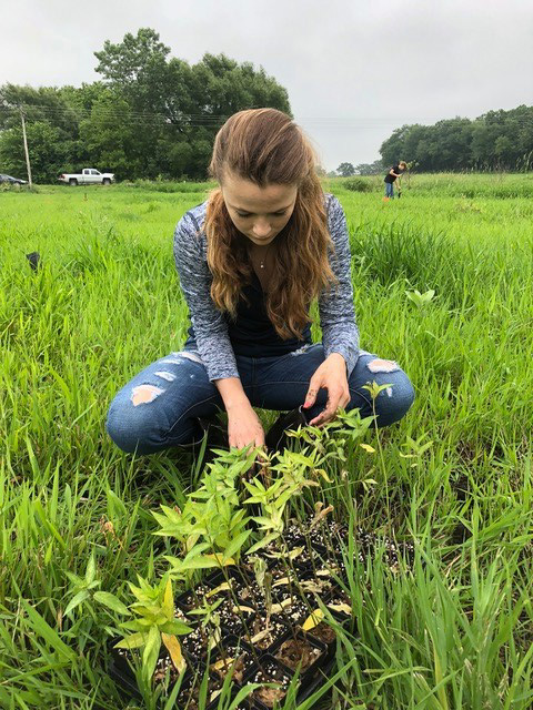 The Wisconsin Monarch Collaborative will focus on adding habitat for monarchs. Here, the Clinton Future Farmers of America plant native plants on a Rock County farm under a partnership with the Sand County Foundation, one of the collaborative members. - Photo credit: Sand County Foundation