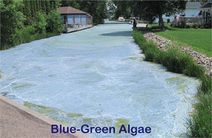 Blue green algae - Photo credit: DNR