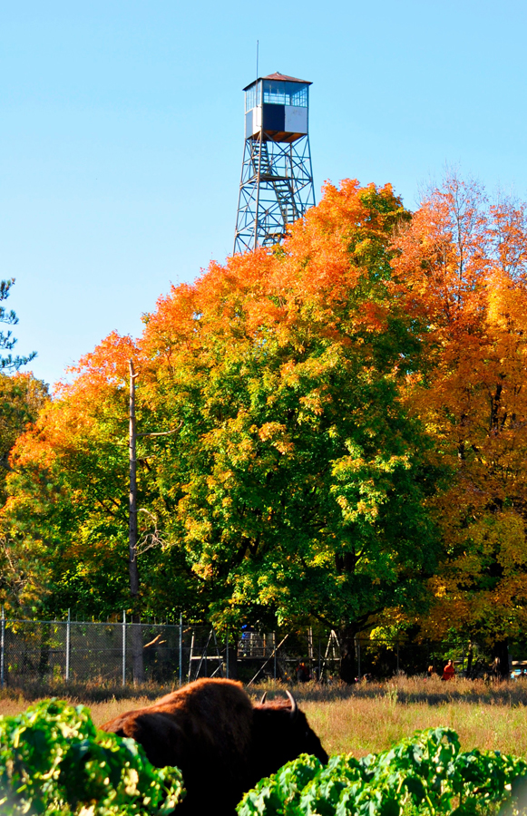 Fall color should be approaching peak this Saturday for the MacKenzie Fall Festival. - Photo credit: DNR