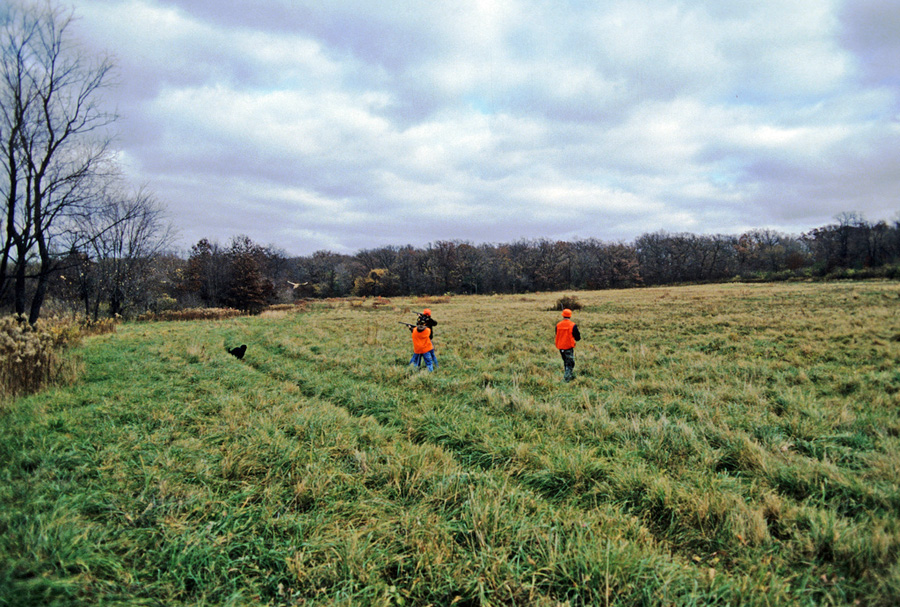 Pheasant hunting in Wisconsin will again take center stage when the fall 2018 pheasant hunting season opens statewide at 9 a.m. on Saturday, Oct. 20. - Photo credit: DNR