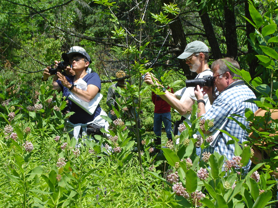 Bumble Bee Brigade volunteers monitor native bumble bees with photography.  - Photo credit: DNR