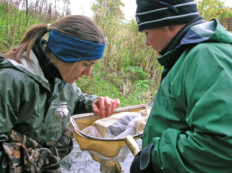 Biologists examine stream insects collected for a stream health survey. - Photo credit: DNR
