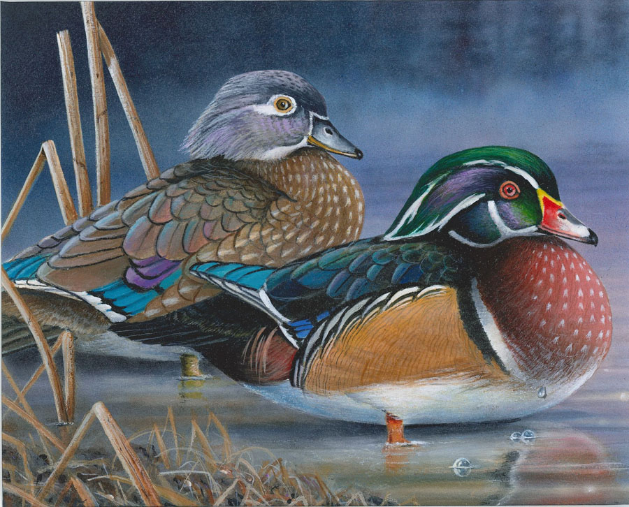 Robert Metropulos of Arbor Vitae, submitted winning artwork for the 2020 waterfowl stamp.