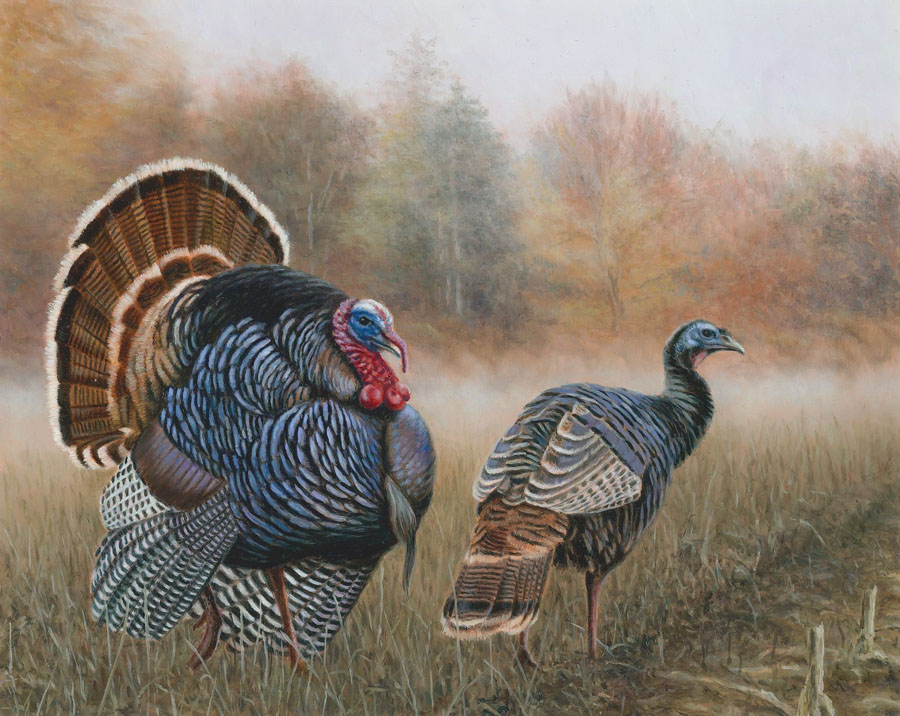 Brian Kuether of Greenfield, WI, submitted winning artwork for the 2020 turkey stamp.
