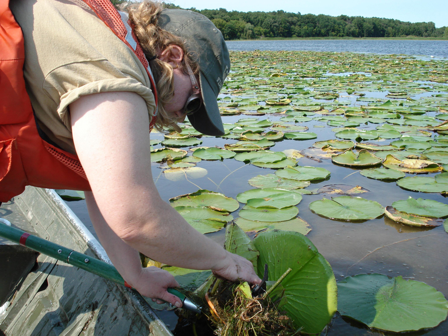 DNR staff surveying a lake's aquatic plants to assess lake health.  - Photo credit: DNR