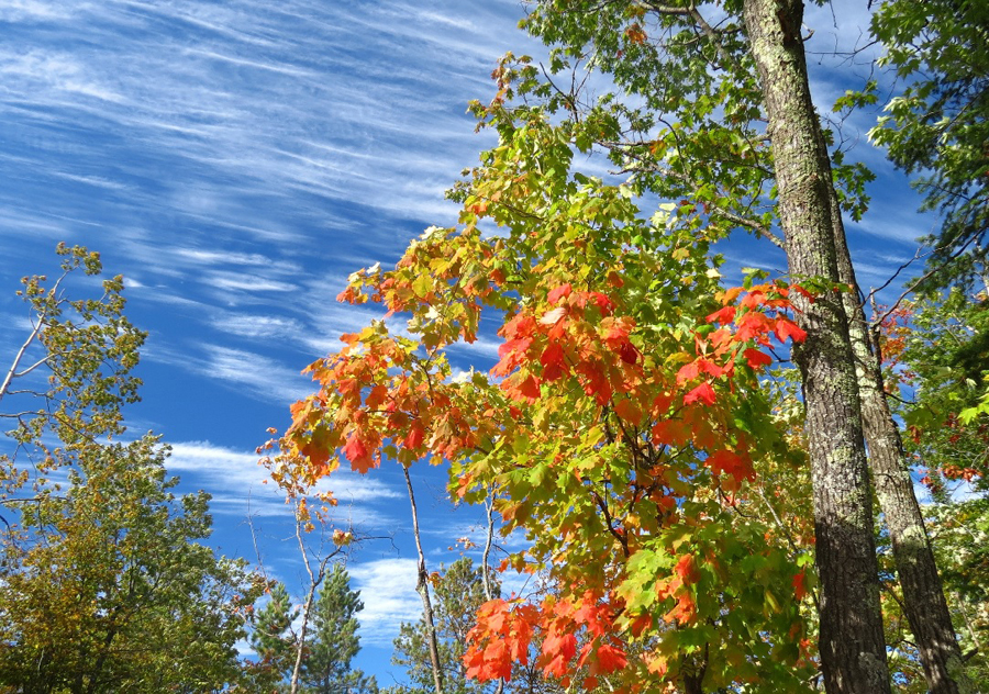 Fall colors are just starting to change, like these early turning maples in the Brule River State Forest. - Photo credit: DNR