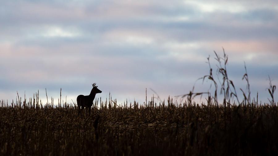 Wisconsin's nine-day gun deer season runs through Sunday, Dec. 1. - Photo credit: DNR