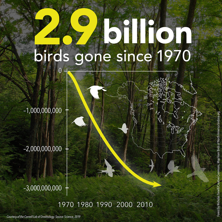 A 2019 study by the Smithsonian Institution, Cornell University's Lab of Ornithology and other institutions found dramatic declines in bird populations. - Photo credit: DNR