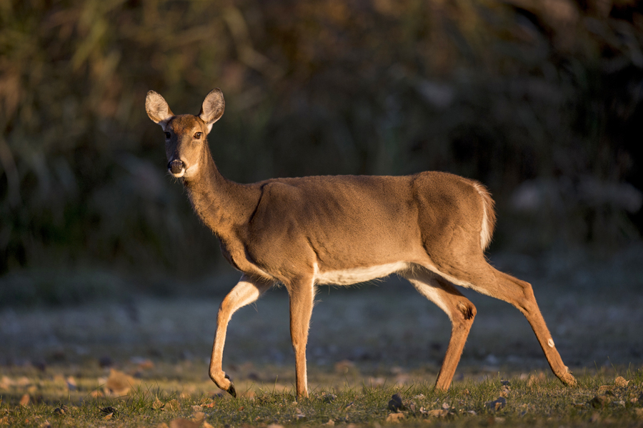 CDAC meetings are important for shaping the 2020 deer hunting seasons and annual antlerless harvest quotas. - Photo credit: Contributed