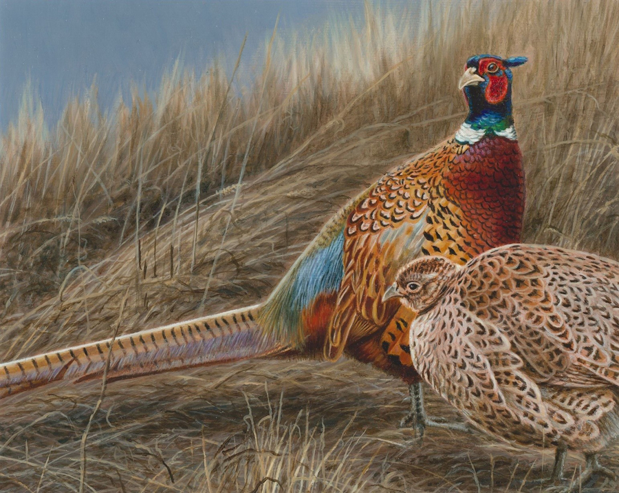 Winning artwork for the 2020 pheasant stamp by Brian Kuether - Photo credit: Brian Kuether